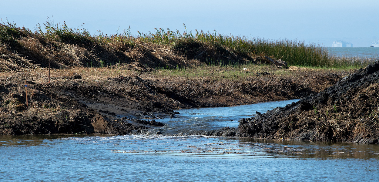 Water flows through an earthen waterway in a levee breach created as part of a tidal restoration project in the Grizzly Island Wildlife Area located in Solano County, California.