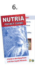 "The front cover of the properly folded nutria pocket guide with the cover partially lifted to reveal the inside sections. Step six of the folding instructions is to confirm that when opening the finished product, the first page is ""What are nutria?"""